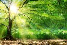 Sous le silence des arbres